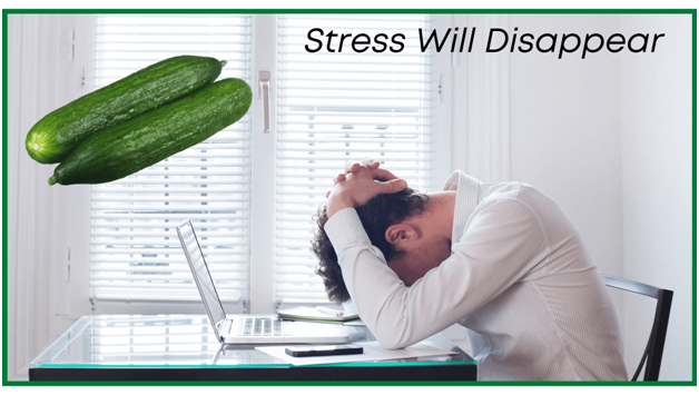 Health benefits of cucumbers - Your stress will disappear